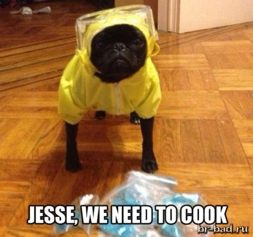 Jesse we need to coock
